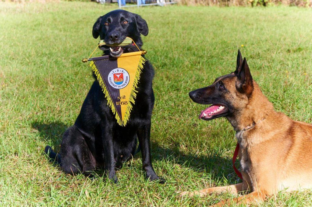 Hundesport beim TSV Neustadt in Holstein
